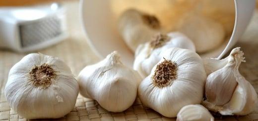 Byliny na snížení cholesterolu