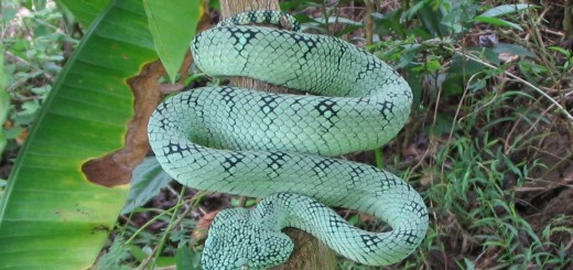 Hadí mast