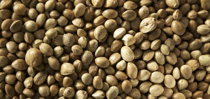 Konopné semínko účinky