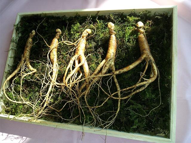 pet-rostlin-a-bylinek-na-posileni-imunity