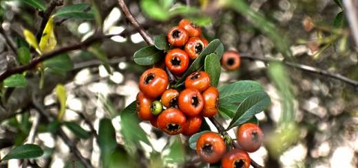 guarana a vedlejší účinky